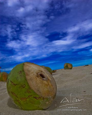 Coconut (Alan Esteva)